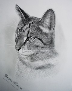 Beefjerky en herlig kat <3